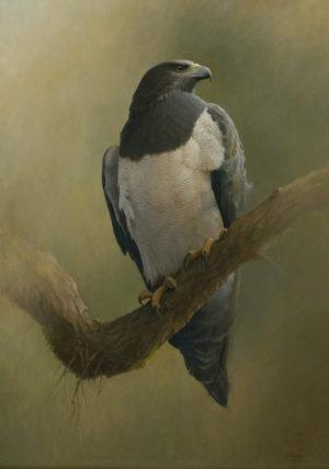 Águila Mora. Acrílico sobre lienzo. 70x50cm. 1997