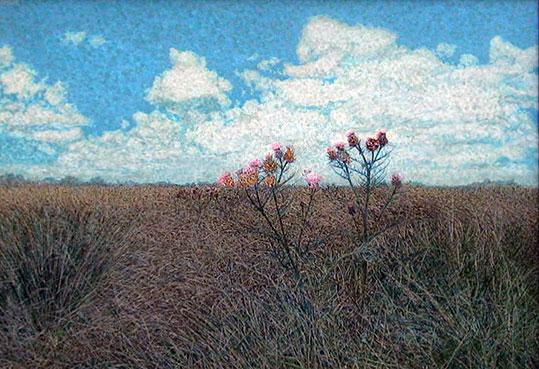 Claudio Rikelme . Los Cardos . acrílico sobre lienzo . 70 x 100 cm . 1999