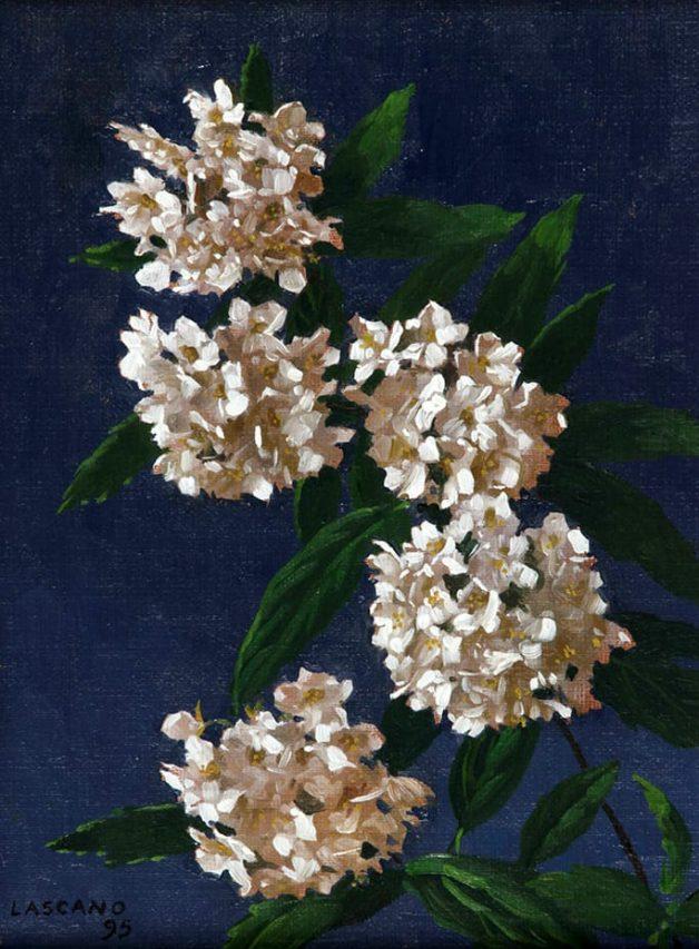Juan Lascano . Corona de Novia . óleo sobre lienzo . 23 x 18 cm . 1995